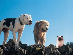 The originals of Homeward Bound - gotta love 'em
